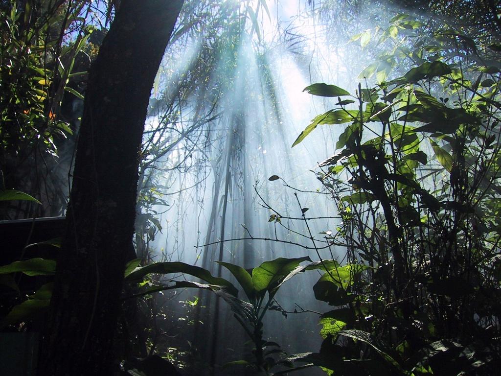 rayos-de-luz-bosque