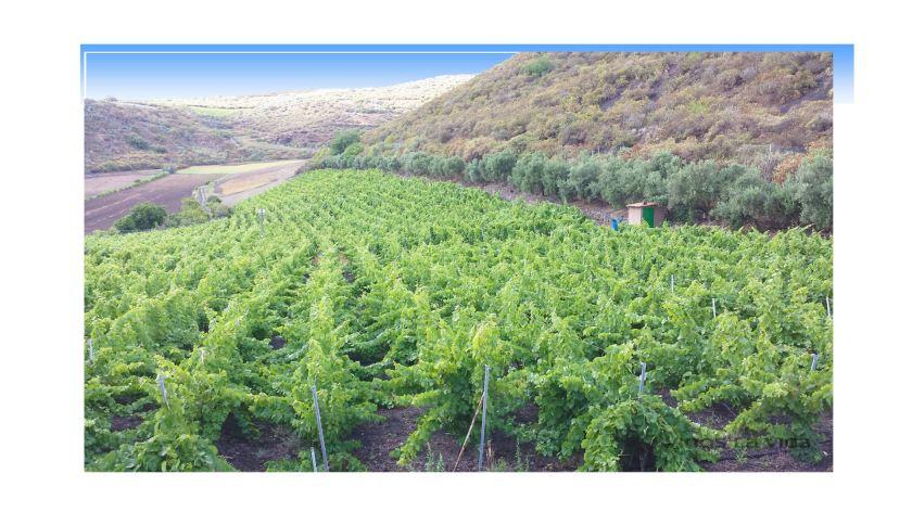 vinos-la-vica-masmediacanarias-slider-12
